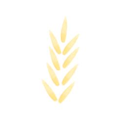 blé ingrédient shampoing